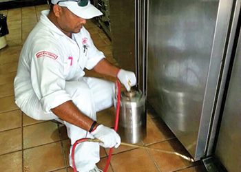 Masa teams are equipped to combat any pest control issue.