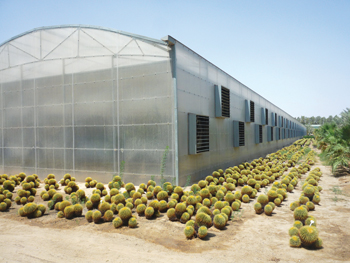 A greenhouse in Saudi Arabia ... another Brett Martin project.